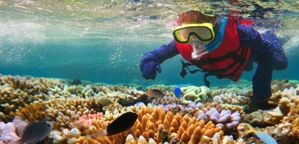 大堡礁 珊瑚 美得動容也令人心碎