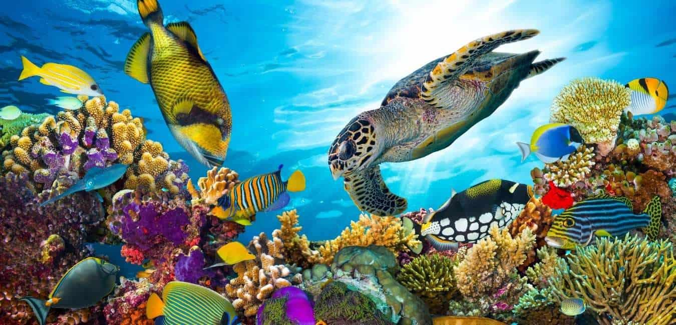 Great Barrier Reef 大堡礁 的美麗正在消失